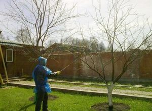 Уход за садом. строение дерева.