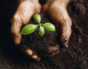 Улучшаем плодородие, структуру, качество почвы