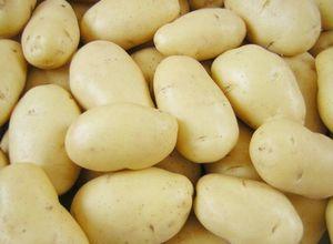 Урожай молодой картошки. ранний картофель