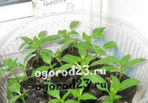 Вермикулит для растений и рассады: инструкция по применению