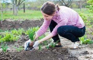 Весенние работы в саду и огороде: что делают в марте, апреле и мае