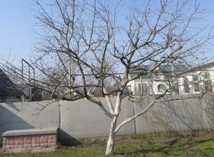 Весенняя и осенняя обрезка винограда
