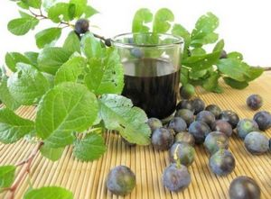 Вина в домашних условиях. рецепты домашних вин.