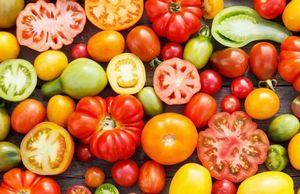 Выбираем подходящие сорта томатов устойчивые к фитофторозу