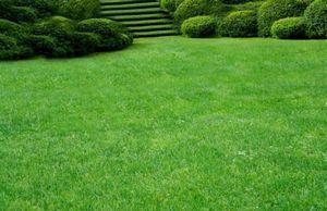 Выбор места для газона. подготовка почвы под газон