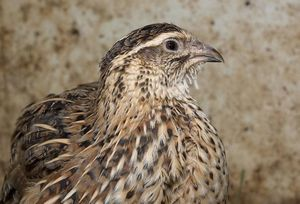 Выгодное разведение птицы