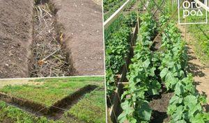 Вылечи землю – вылечишь растения