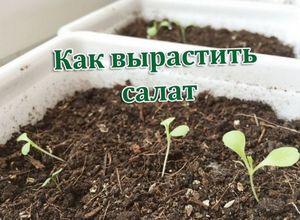 Выращиваем ягнят на даче