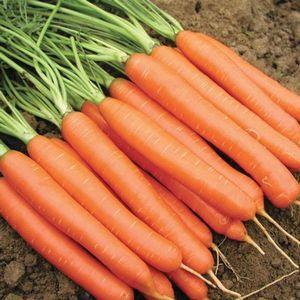 Выращивание чеснока – посадка, уход, уборка и хранение.