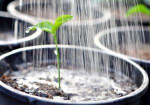 Выращивание рассады. как приготовить воду для рассады