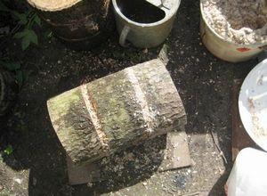 Выращивание шиитаке в домашних условиях - подготовка, посадка и уход