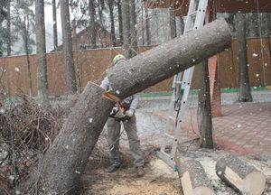 Вырубка деревьев с участка
