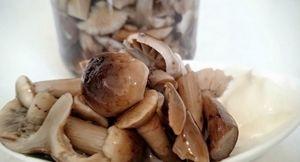 Заготовки на зиму из опят: соления, икра, заморозка