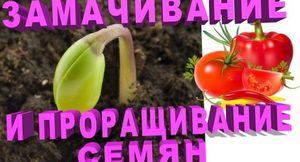 Замачивание семян перца перед посадкой: когда и как правильно сделать