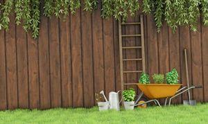 Живая изгородь на даче – красота и польза в одном наборе
