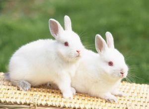 Зимний рацион кролика