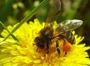 Зимовка пчел. как ведут себя пчелы зимой?